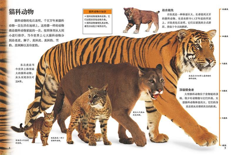 老虎身体结构图片大全