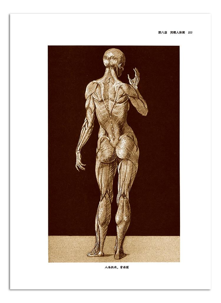 艺用人体解剖完全指南(手绘版)